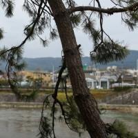 2階:松の木と鴨川